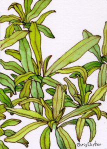 french-tarragon-artist-trading-cards-ATC-ink-watercolor-Chris-Carter-Artist-010213